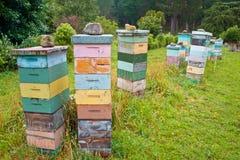 Grupo de colmenas de madera multicoloras de la abeja Fotos de archivo libres de regalías