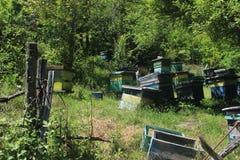 Grupo de colmenas en naturaleza Foto de archivo