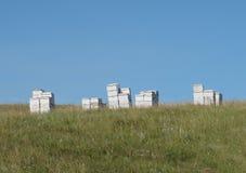 Grupo de colmenas en un pasto Imagen de archivo libre de regalías