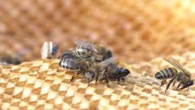 Grupo de colonia de las abejas en colmena de la abeja almacen de metraje de vídeo
