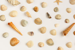 Grupo de conchas do mar múltiplas isoladas sobre o fundo branco foto de stock