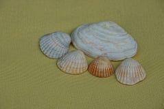 Grupo de conchas do mar na luz amarela - fundo marrom foto de stock royalty free