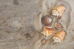Grupo de conchs e de shell do mar colocados na areia da praia e em t de madeira Foto de Stock