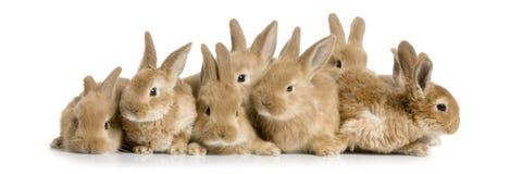 Grupo de conejitos Fotos de archivo libres de regalías