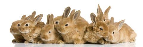 Grupo de conejitos fotografía de archivo libre de regalías