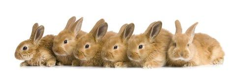 Grupo de conejitos Imagen de archivo libre de regalías
