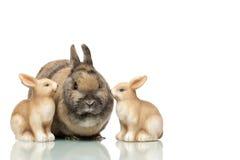 Grupo de conejitos de pascua que se sientan junto Fotografía de archivo