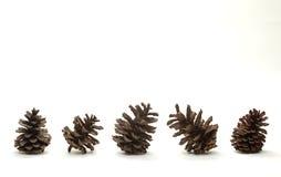 Grupo de cones do pinho isolados Fotografia de Stock