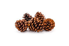 Grupo de 5 cones do pinho no fundo branco Foto de Stock Royalty Free