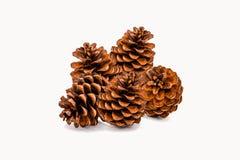 Grupo de 5 cones do pinho no fundo branco Fotografia de Stock