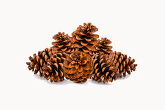 Grupo de cones do pinho no fundo branco Imagens de Stock