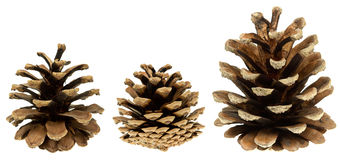 Grupo de cones isolados no branco Fotos de Stock