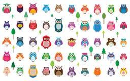 Grupo de cor da coruja 50 Fotos de Stock
