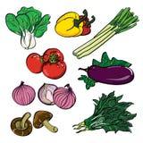 Grupo de cor vegetal ilustração royalty free