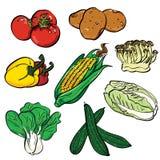 Grupo de cor vegetal ilustração do vetor