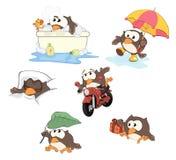 Grupo de corujas bonitos para você projeto cartoon Imagens de Stock Royalty Free