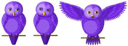 Grupo de corujas violetas roxas, vetor Fotografia de Stock Royalty Free
