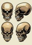 Grupo de crânio em estilo detalhado ilustração royalty free