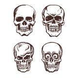 Grupo de crânios do vetor Fotografia de Stock