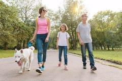 Grupo de crianças que andam com um cão ronco branco, fundo da estrada do parque imagens de stock