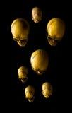 Grupo de crânios Fotografia de Stock Royalty Free
