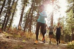 Grupo de cuatro adultos que corren en un bosque, opinión de ángulo bajo Imagen de archivo