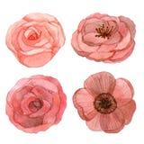 Grupo de desenho da aquarela das flores Imagens de Stock Royalty Free