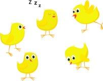 Grupo de desenhos animados engraçados das galinhas Fotografia de Stock Royalty Free