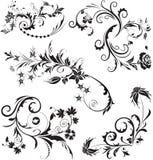 Grupo de design floral do vetor no branco Ilustração do vetor ilustração royalty free