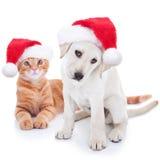 Grupo de dois animais de estimação do Natal Imagens de Stock Royalty Free