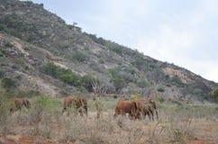 Grupo de elefantes, Kenia Fotografía de archivo libre de regalías