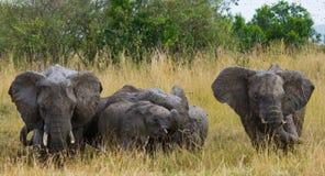 Grupo de elefantes que caminan en la sabana África kenia tanzania serengeti Maasai Mara Fotos de archivo