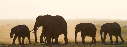 Grupo de elefantes que caminan en la sabana África kenia tanzania serengeti Maasai Mara Fotografía de archivo