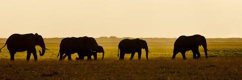 Grupo de seens del elefante hecho excursionismos Imagen de archivo libre de regalías