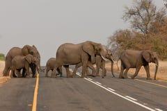Grupo de elefantes salvajes en África meridional. Imagen de archivo