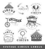 Grupo de elementos do circo Fotografia de Stock