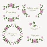 Grupo de elementos do projeto das flores ilustração royalty free