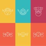 Grupo de elementos florais esboçados Fotografia de Stock