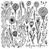 Grupo de elementos preto e branco da garatuja Dentes-de-leão, grama, arbustos, folhas, flores Ilustração do vetor, grande projeto ilustração royalty free
