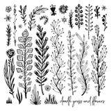 Grupo de elementos preto e branco da garatuja Planta, grama, arbustos, folhas, flores Ilustração do vetor, grande elemento do pro ilustração stock