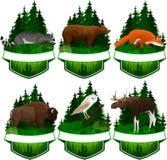 Grupo de emblemas da floresta do vetor com coruja de celeiro, a raposa vermelha, o racum, o urso pardo, o touro dos alces e o bis Foto de Stock