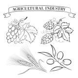 Grupo de emblemas e de etiquetas ilustração stock