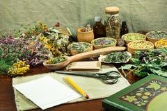 Grupo de ervas curas Foto de Stock