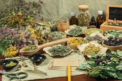 Grupo de ervas curas Grama secada para o uso no medicin alternativo Imagem de Stock