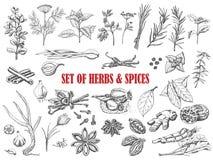 Grupo de ervas e de especiarias no estilo do esboço Imagens de Stock Royalty Free