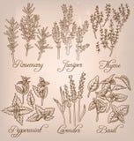 Grupo de ervas essenciais Imagem de Stock Royalty Free