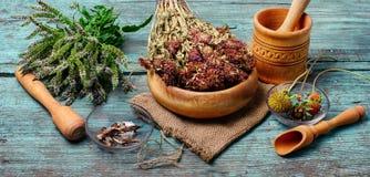 Grupo de ervas medicinais Foto de Stock