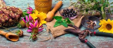 Grupo de ervas medicinais Imagens de Stock Royalty Free