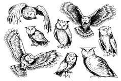 Grupo de esboços das corujas Imagem de Stock