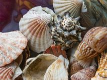 Grupo de escudos em uma bacia de vidro, decorado em uma casa do mar imagens de stock royalty free